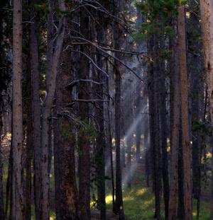 a_trees_ray